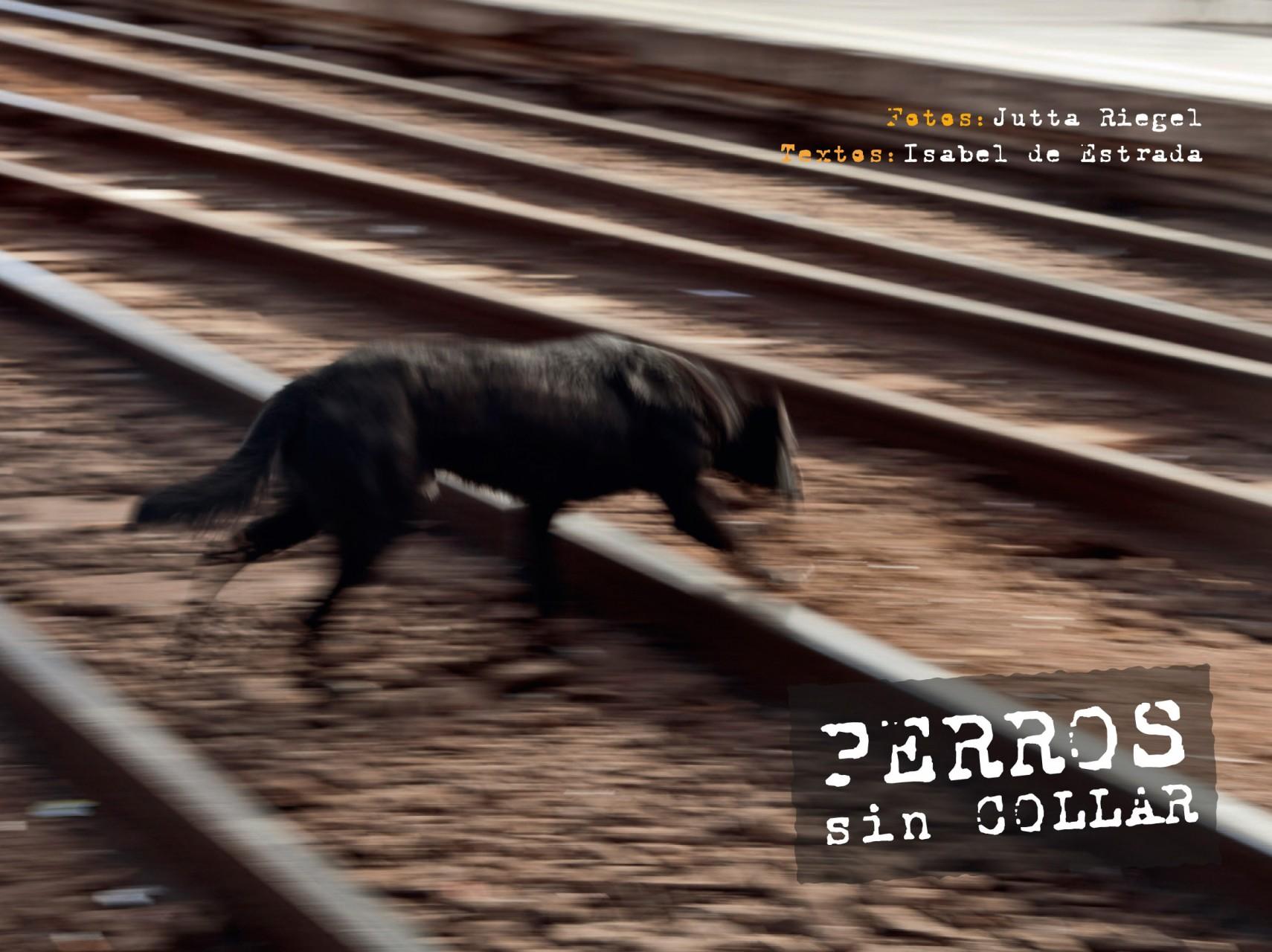 Perros sin collar